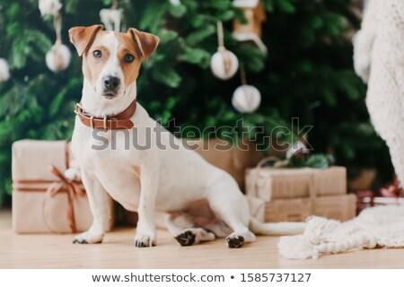 Horizontal tiro adorável animal de estimação piso decorado Foto stock © vkstudio