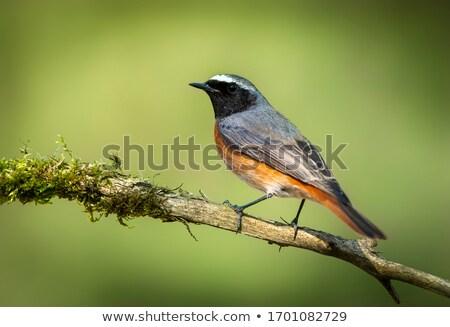 masculino · lagarta · caneta · laranja · pássaro · verde - foto stock © njaj