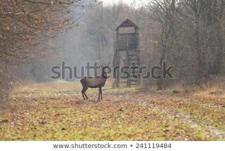 狩猟 塔 冬 森林 自然 風景 ストックフォト © tepic