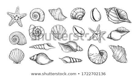 Sinks of mollusks Stock photo © yul30