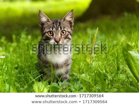 Kedi çim ev yeşil ücretsiz pot Stok fotoğraf © cheyennezj