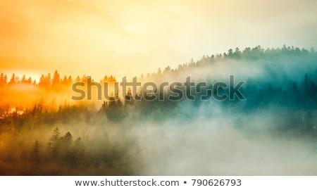 Stockfoto: Najaar · mist · bos · landschap · berg · Rood