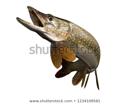 Pike, Isolated Illustration Stock photo © ConceptCafe