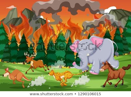 Zwierząt uruchomić z dala wildfire ilustracja ognia Zdjęcia stock © bluering