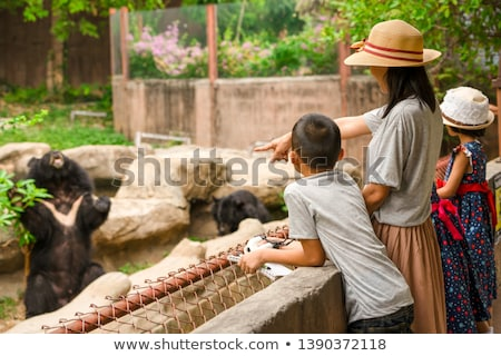 A bear family in the zoo Stock photo © colematt