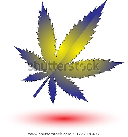 Card with green marijuana leaf. Stock photo © artjazz