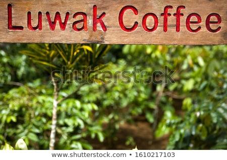Imzalamak tarla geleneksel kahve iş Stok fotoğraf © boggy