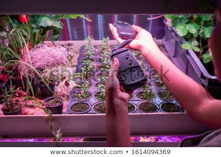 Mains Homme effet de serre travailleur Photo stock © pressmaster