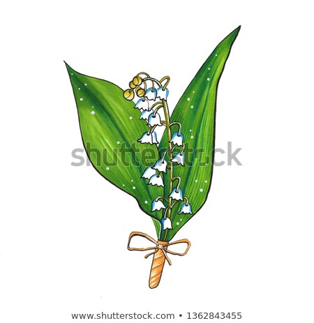 Lilly bell flower on green background Stock photo © Bananna
