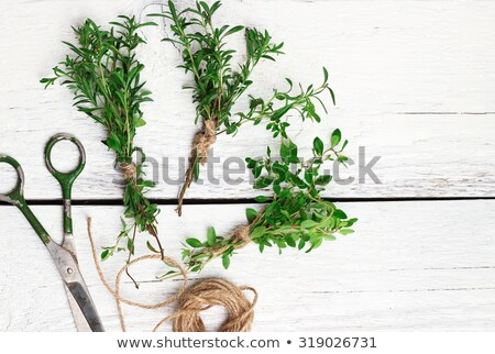 Vegetables still life with scissors  Stock photo © dashapetrenko