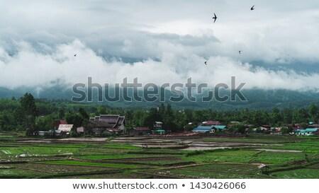kahve · büyüyen · köy · bali · ağ · Endonezya - stok fotoğraf © Komar