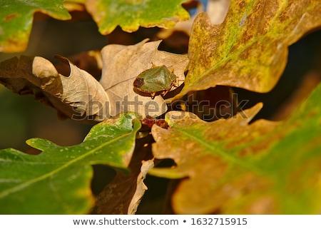 ブラウン カブトムシ 緑 自然 庭園 春 ストックフォト © sweetcrisis