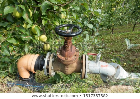 Watering Orchard Stock photo © UPimages