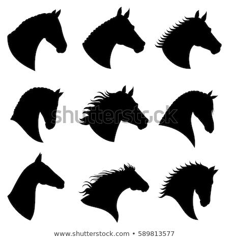 Silhouet paard hoofd geïsoleerd witte sport Stockfoto © fotoscool