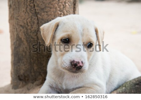lonely stray puppy dog lying down stock photo © feedough