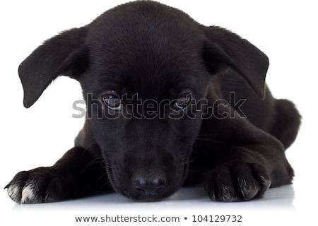 Stockfoto: Zijaanzicht · eenzaam · weinig · zwarte · puppy · hond