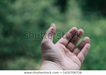 tweezers and splinter Stock photo © prill
