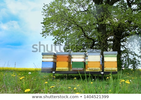 Coloured beehives Stock photo © lebanmax