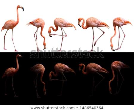 grup · pembe · su · ahşap · doğa · güzellik - stok fotoğraf © sarkao