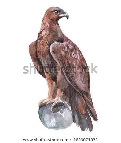 Águia pássaro símbolo abstrato assinar silhueta Foto stock © dagadu