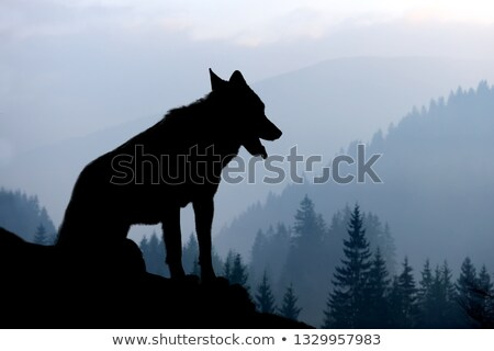 wolf at sunset stock photo © adrenalina