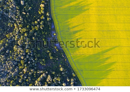 Aerial view of a green agricultural field Stock photo © jrstock