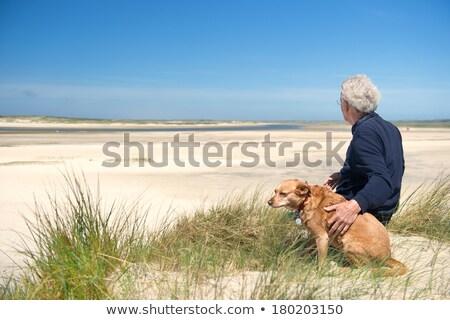 Cross Breed Dog Sits in the Water Stock photo © bradleyvdw