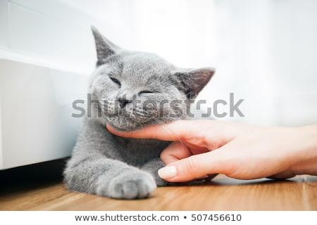 Cat being stroked Stock photo © nailiaschwarz