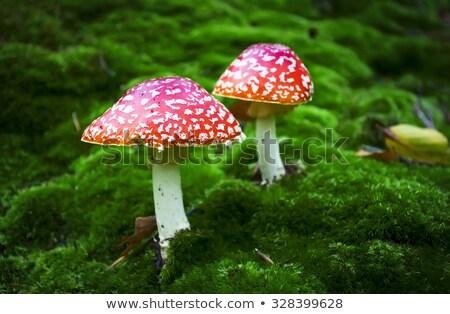 菌 · 赤 · 秋 · 危険 · 自然 · シーズン - ストックフォト © chatchai