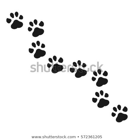 abstract paw prints stock photo © burakowski