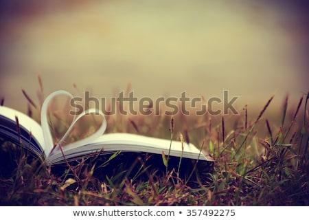 Open · boek · witte · illustratie · licht · achtergrond - stockfoto © m_pavlov