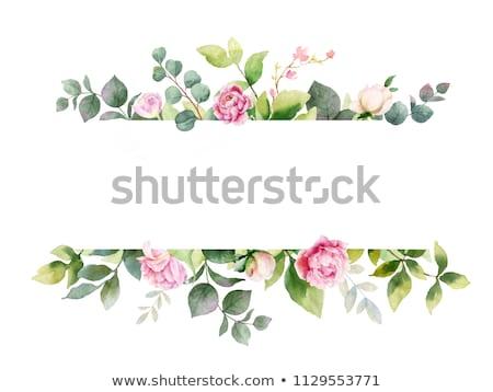 аннотация · цветочный · Iris · рисованной · белый - Сток-фото © derocz