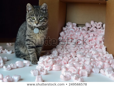 Isolated open cardboard box with spilled packing peanuts Stock photo © njnightsky
