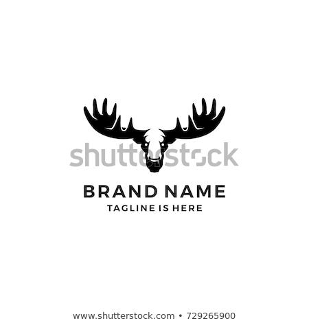 hoofd · geïsoleerd · fabelachtig · beest · hoorn · fantastisch - stockfoto © hermione