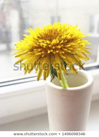 Pitypangok váza három nap terv levél Stock fotó © mady70