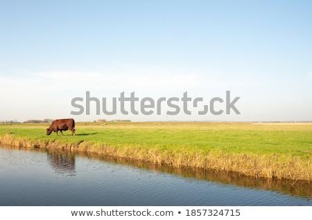 vee · groep · groene · gras · landschap · bomen - stockfoto © olandsfokus