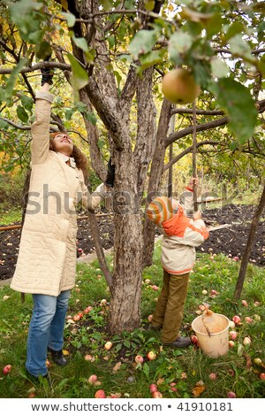 Mather and son gather apples in autumnal garden Stock photo © Paha_L