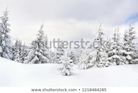 witte · ijzig · bomen · sneeuw · gedekt · landschap - stockfoto © meinzahn