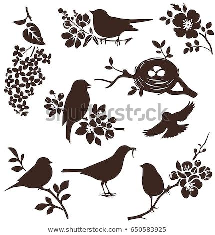 vogels · boom · hart · nest · vector · vergadering - stockfoto © natalya_zimina