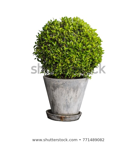 a big pot with flowers stock photo © bluering