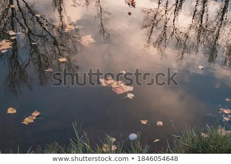 葉 · 水生の · 工場 · 水面 - ストックフォト © klinker