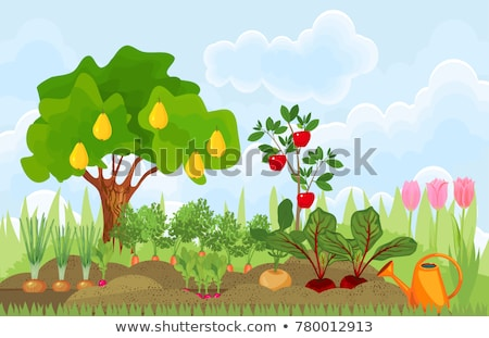 Stock photo: Beetroot in Vegetable Patch