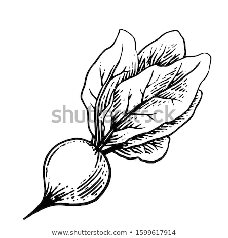 Stock photo: Beetroot Marker