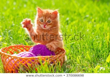 子猫 · 演奏 · ボール · ウール · 赤 · アームチェア - ストックフォト © yatsenko