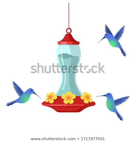 Rot Kolibri hängen Blume Wasser Stock foto © mybaitshop