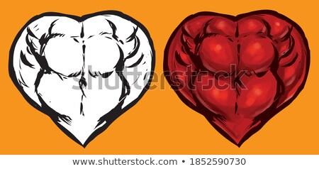Muscolare cuore corpo forte amore isolato Foto d'archivio © popaukropa
