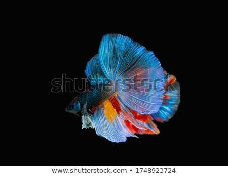 Kék hal vadászrepülő fehér szépség űr Stock fotó © robinsonthomas