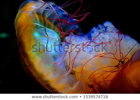 látványos · meduza · kék · tenger · víz · textúrák - stock fotó © bsani