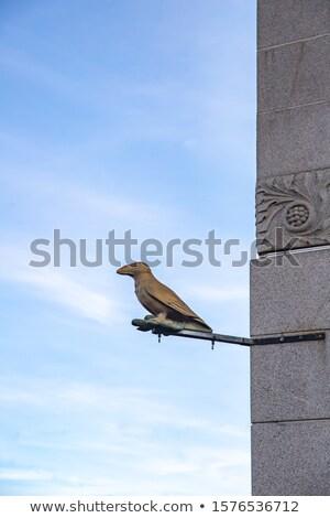 カラス 像 道路 通り 鳥 石 ストックフォト © skovalsky