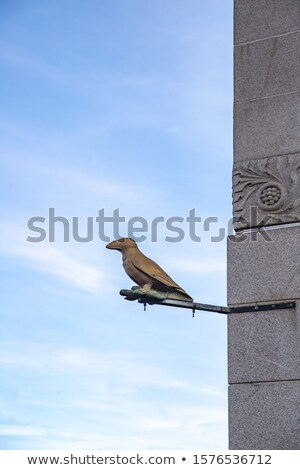 Raven statue Stock photo © skovalsky